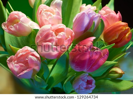 A close-up photo of Pink, red and yellow tulips