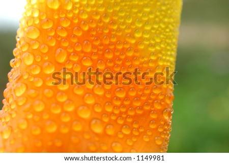 A close up photo of rain droplets on a California Poppy. - stock photo