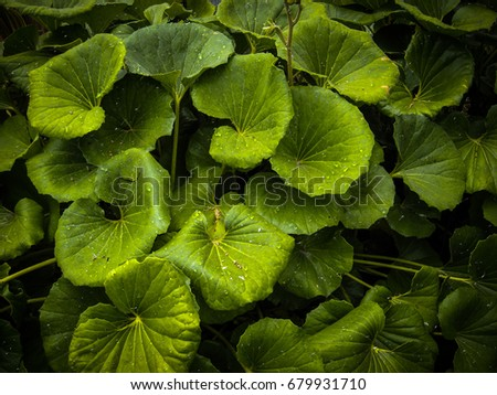 Green Water Weed Background Stock Photo 97669913 Shutterstock