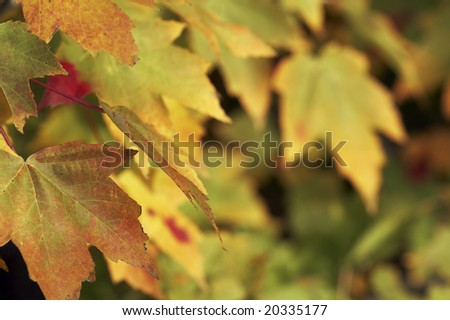 a close up picture of leaves in fall