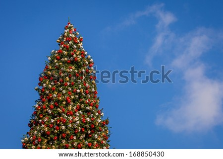 A close up shot of a very tall Christmas tree with a blue sky background. - stock photo