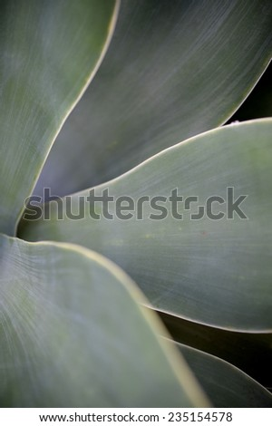 A close up shot of succulent plant leaves - stock photo