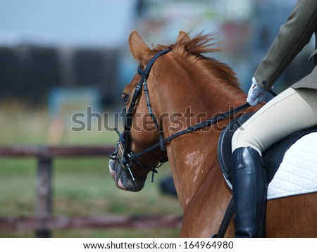 A close up shot of the side of a horse during a dressage competition. - stock photo