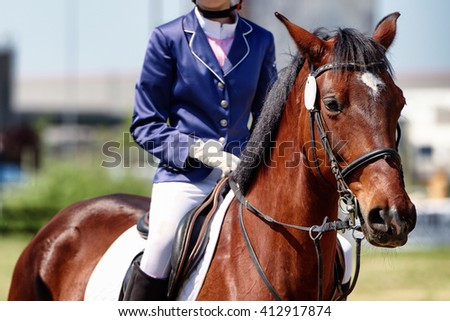 A close up view of a horse in competition race - stock photo