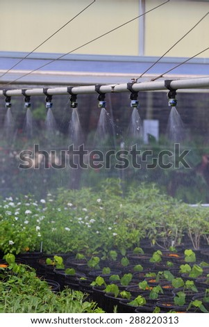 A close up view of a watering boom inside a greenhouse.