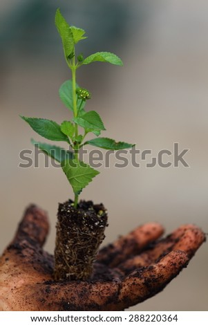 A close up view of someone growing a plant in their hand.  - stock photo