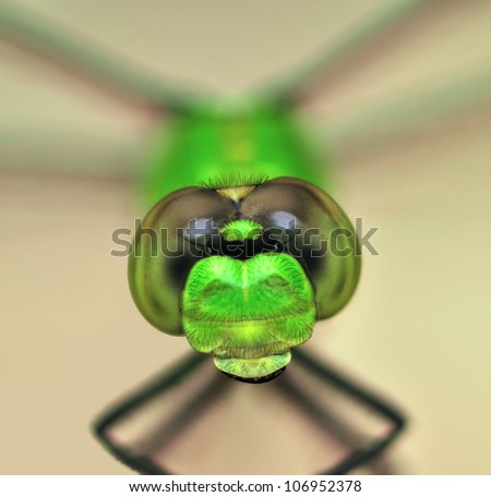 A close- up view of the head of an Eastern Pondhawk dragonfly (Erythemis simplicicollis) shot with a macro lens and extension tubes. - stock photo