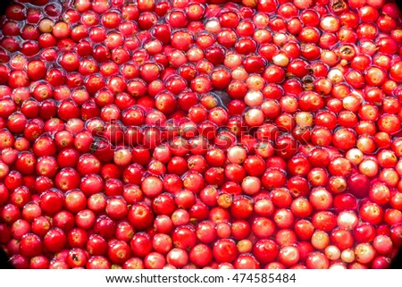A close up view of wild fresh berries floating in pure cold water under sun light