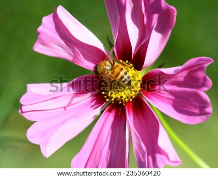 A close view of a purple flower with spread petals and bright yellow center. - stock photo