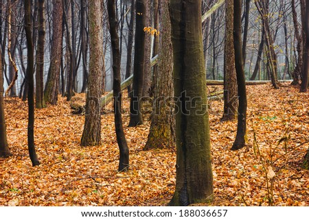 A closeup of a forest during fall