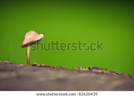 A closeup of a wild mushroom on a tree stump against a grassy green background. Photo has short depth of field.