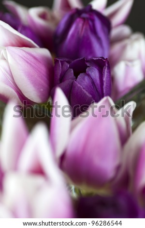 A closeup of pink and rose tulips in a vase