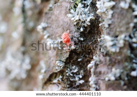 A closeup photo of the little bug in the forest - stock photo
