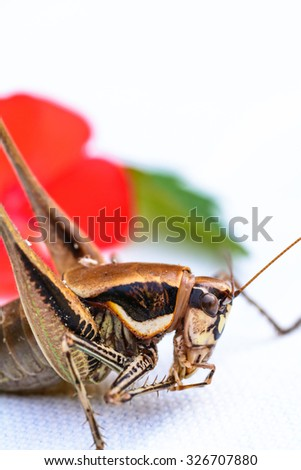 A closeup view of a beautiful insect in a blurry background