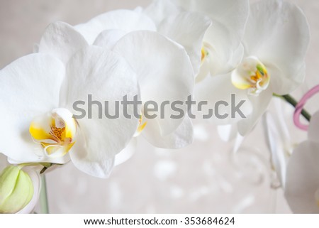 A closeup view of the white orchid flowers