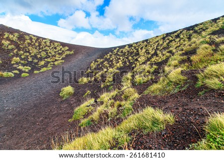 A closup of a clump of grass on a black volcanic ground near Etna volcano, Sicily, Italy - stock photo