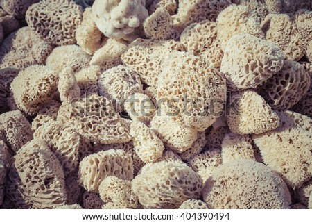 A closup of a natural sponges  - stock photo