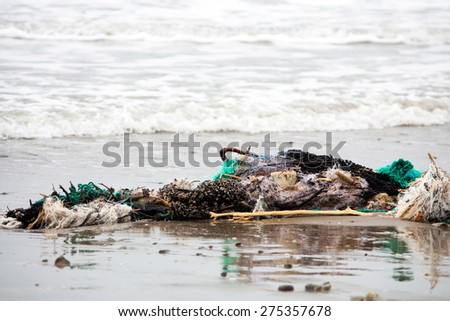 A clump of fishing net and garbage washed up on a beach in Ecuador.  This debris represents a danger to marine  wildlife - stock photo