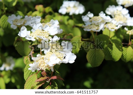 A cluster of pretty white flowers.