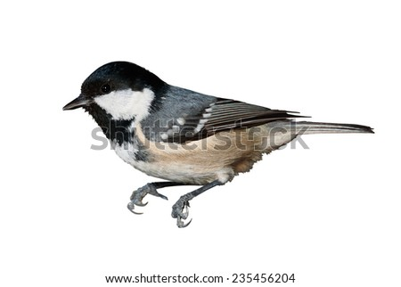 A coal tit isolated on white background - stock photo