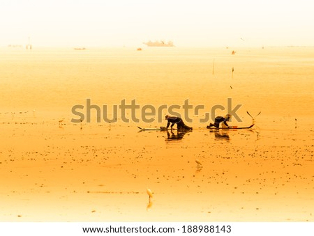 A cockle farmer sitting on the board while collect cockles from the sea in Phetchaburi  province ,Thailand