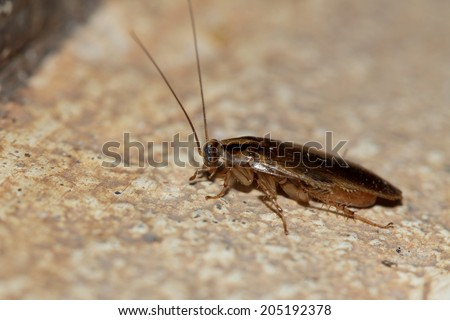A cockroach on ground - stock photo