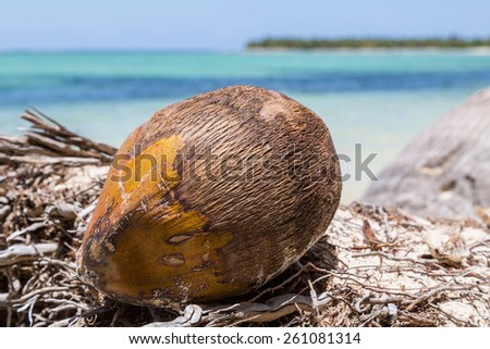 a coconut is located on the beach - stock photo