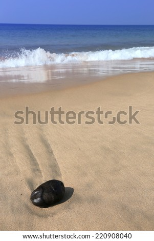 A coconut  on a tropical beach. Shallow depth of field, focus on the coconut - stock photo