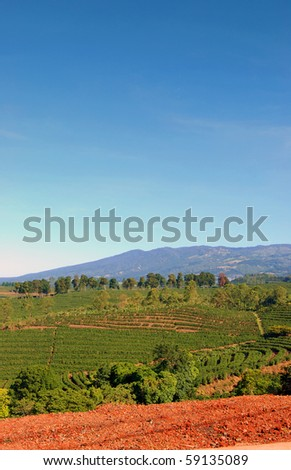 A coffee plantation in Costa Rica with mountains in the background. - stock photo