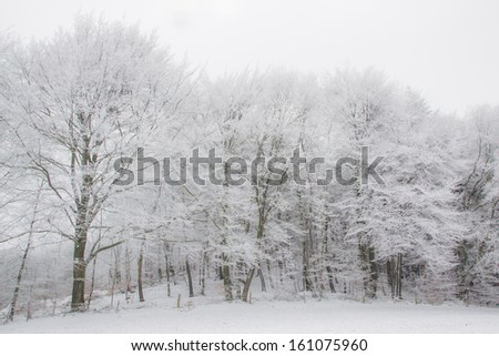 A cold and white winter day - stock photo