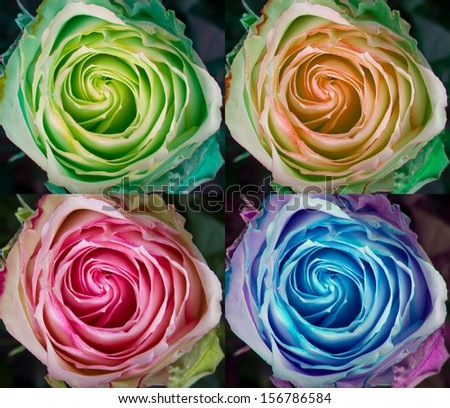 A collage of colorful rose spirals of green, peach, pink and blue.   - stock photo