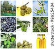 a collage of nine pictures of different scenes of olive harvesting and products - stock photo
