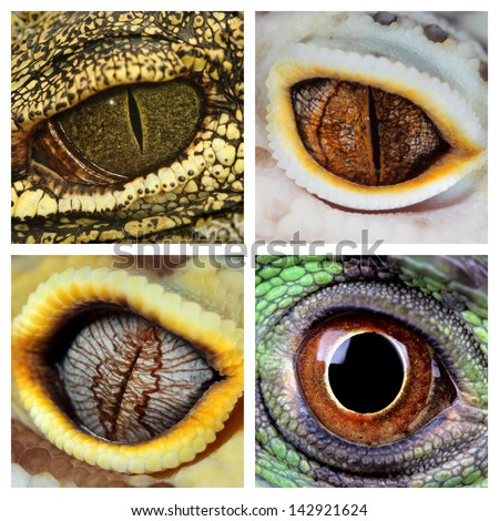 a collage of the eyes of four different reptiles, a green iguana, a crocodile and a leopard geckos - stock photo
