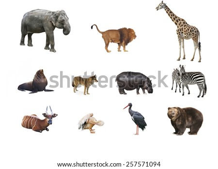 A collage of wild animals - stock photo