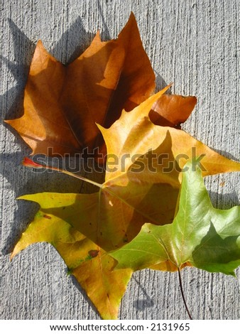A collection of different colored autumn leaves.