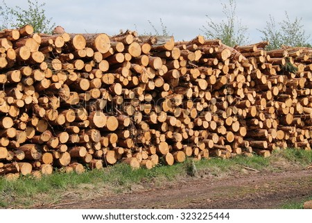 A Collection of Freshly Felled Pine Tree Logs. - stock photo