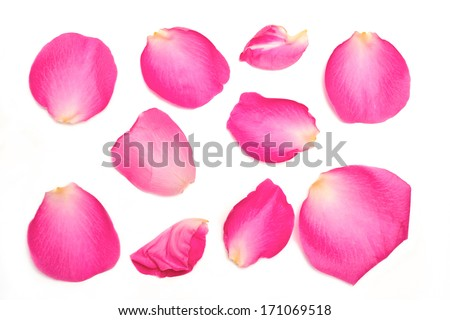 A collection of pink rose petals on a white background. - stock photo