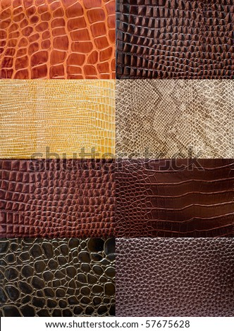 A collection of reptile skin textures. - stock photo