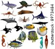 A collection of sea life - stock vector