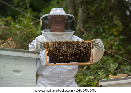 A colony of bees are swarming in a hive while the bee keeper cares for the bees. - stock photo
