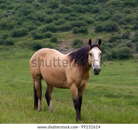 A Colorado Horse Standing in Green Meadow - stock photo