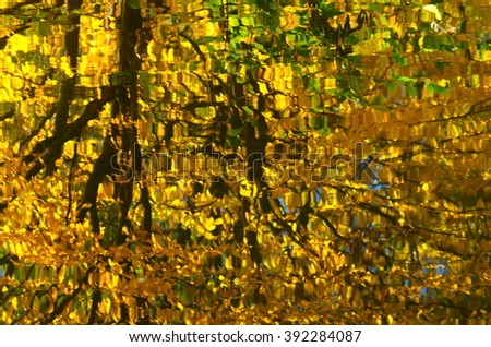 A colorful abstract view of the reflection of a tree on the ripples of the water surface. Photography blur tree reflection on water. Natural background.