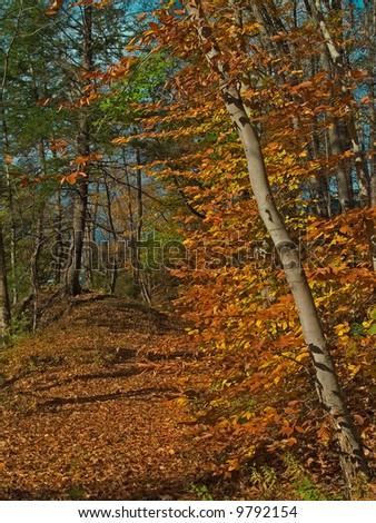 A colorful Autumn trail through the woods in the Pocono Mountains of Pennsylvania.