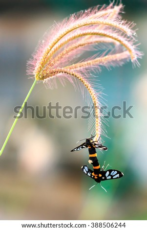 a colorful butterflies are breeding on plant - stock photo