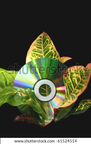 A colorful cd disk in the middle of a tropical plant. - stock photo