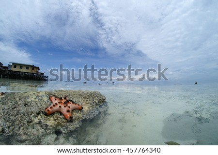 A Colorful Chocolate Chip Seastar (Protoreaster nodosus) On A Dead Coral In Celebes Sea, Mabul, Sabah, Malaysia. - stock photo