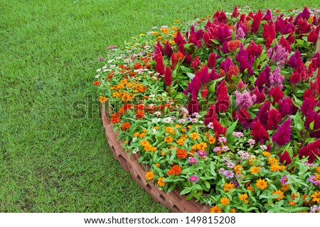 a colorful flower with different types of flowers in the garden. - stock photo