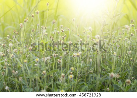 A colorful grass flower and light in the morning.