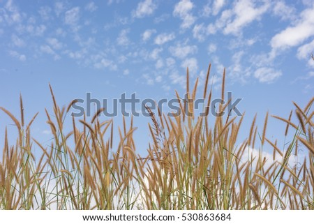 A colorful grass flower with blue sky.