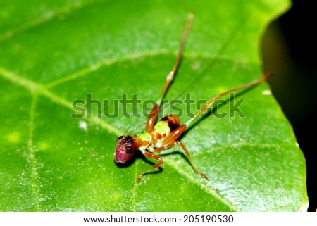 A colorful grasshopper on leaf - stock photo